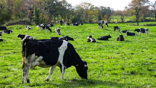 Milk Price Tracker: Price increases across the board, but who is top of the table?