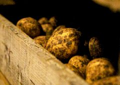 Potato prices: Maincrop yields below average
