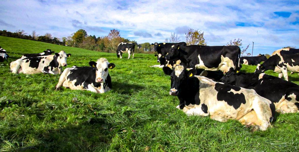 Dairy Gene Ireland