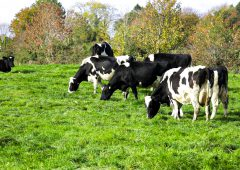Teagasc aiming for 15% reduction in dairy emissions intensity by 2027