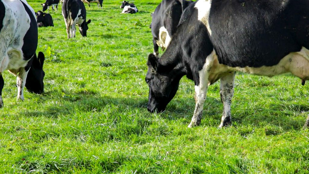 51% emission 2030 target 'would require substantial reduction' in farming – Teagasc