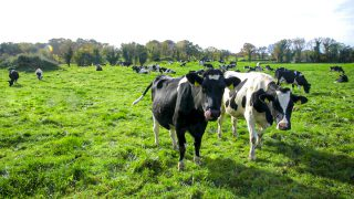Milk Price Tracker: Price increase for March supply as peak supply looms