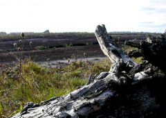 Cabinet approves €108 million funding for bog rehabilitation plan
