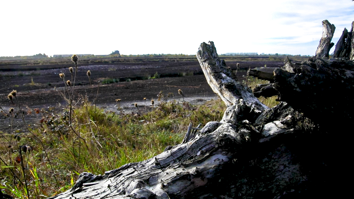Bog restoration project cannot be 'a backdoor to land designations'