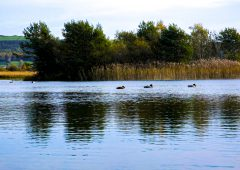 Fears of slurry-causing algae in Lough Corrib are 'without proof'