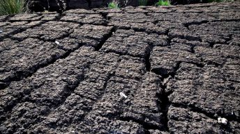 Cahill slams peat imports 'from other side of the continent'