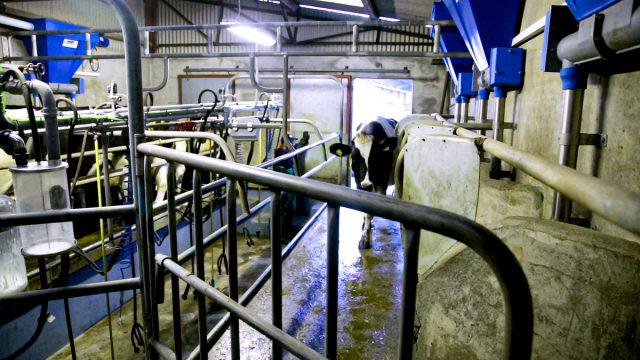 IFA呼吁牛奶价格反映Ornua价值支付