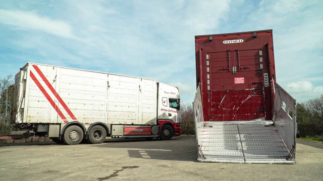 Views sought on the welfare of animals during transport in the EU