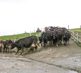 Reducing emissions from your dairy herd through EBI