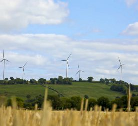 Greenhouse gas emissions from NI agriculture up 1%