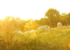 Farmers urged to 'not lose sight' of sun exposure risks