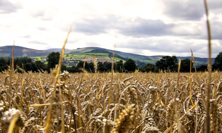 Report: Slight increase in EU agri-food trade despite Brexit and Covid