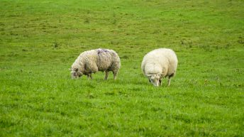 Teagasc Virtual Sheep Week: Latest technical information, research and advice