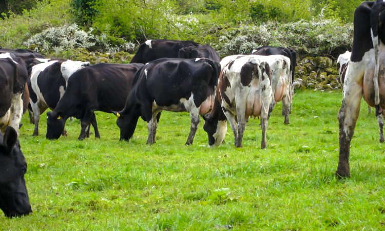 Opinion: Seizing opportunity in a crisis – what's next for Ireland's food producers?