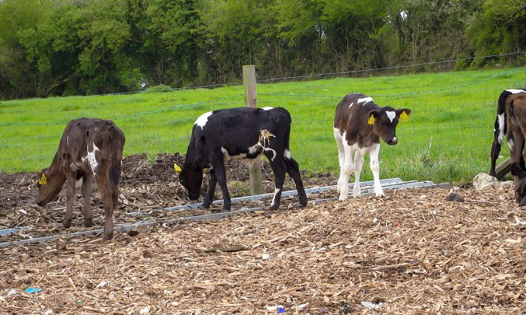 Calls for 120-day TB testing calf exemption to be maintained