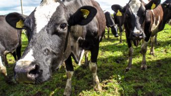 New project to use artificial intelligence to identify sick livestock