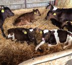 Live exports: Extra measures 'regularly taken' to safeguard animal welfare
