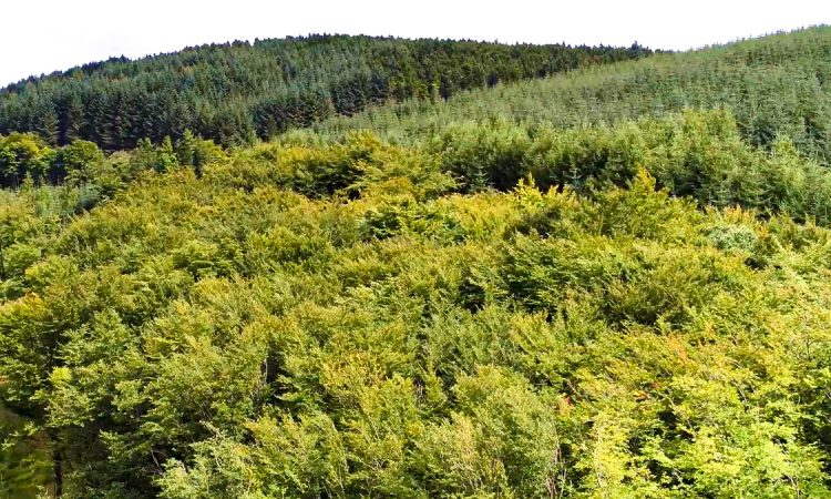 Forestry sector sees €77 million in Stamp Duty relief in 2019