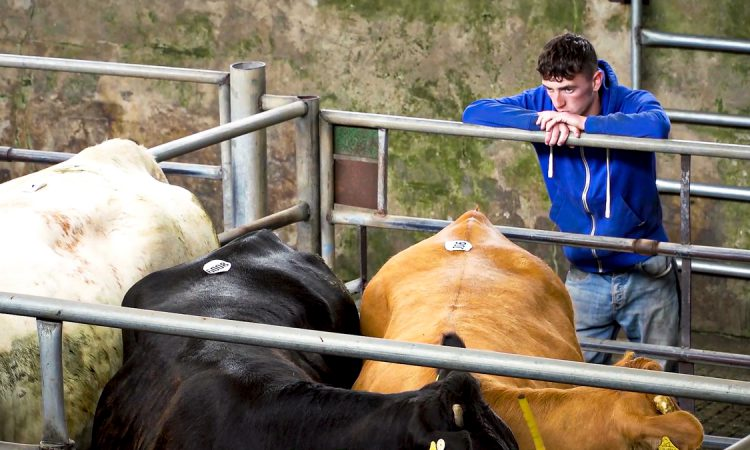 Department to provide restriction outline to marts 'in coming days'