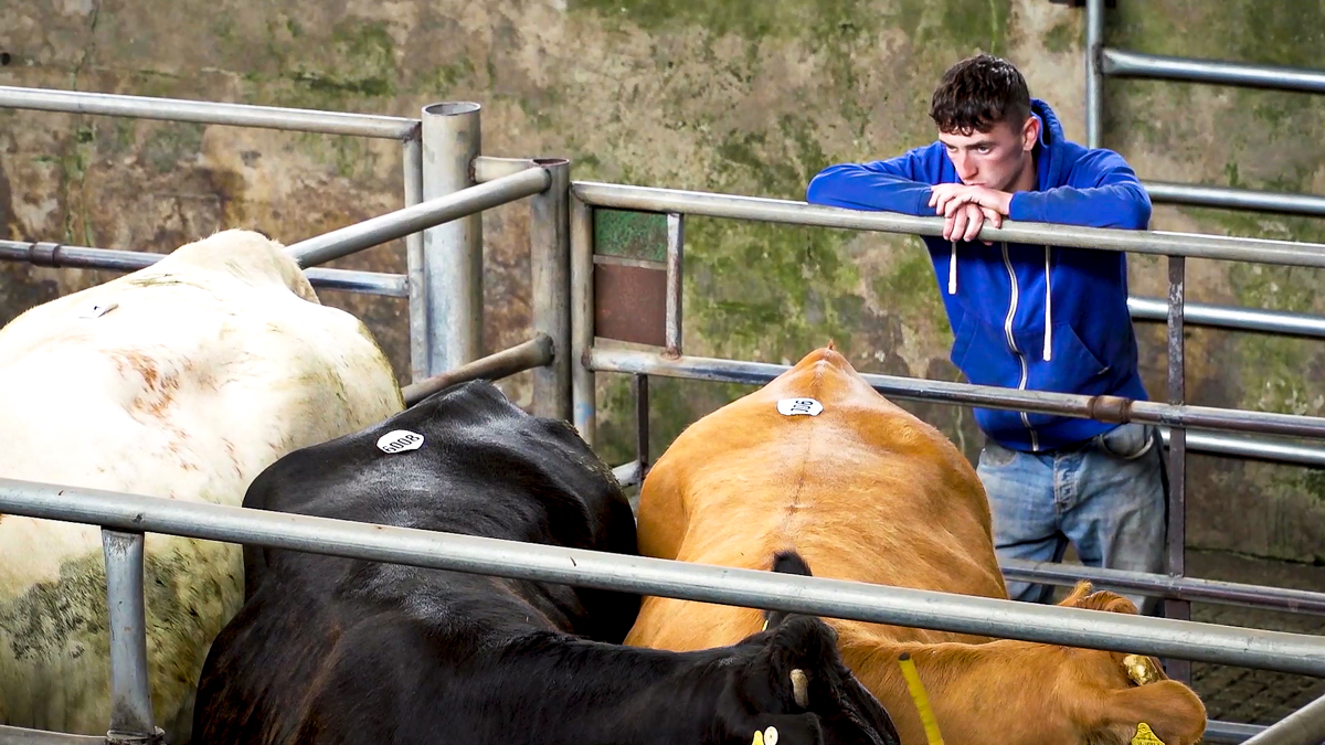 ICOS 'urge farmers to minimise contact with others'