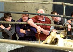 Farmer confidence remains low across EU in 2020 – survey