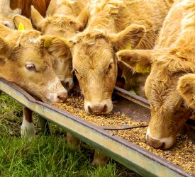 New targets for animal feed outlined in climate roadmap