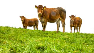 Autumn weanling mart show and sale set for this weekend