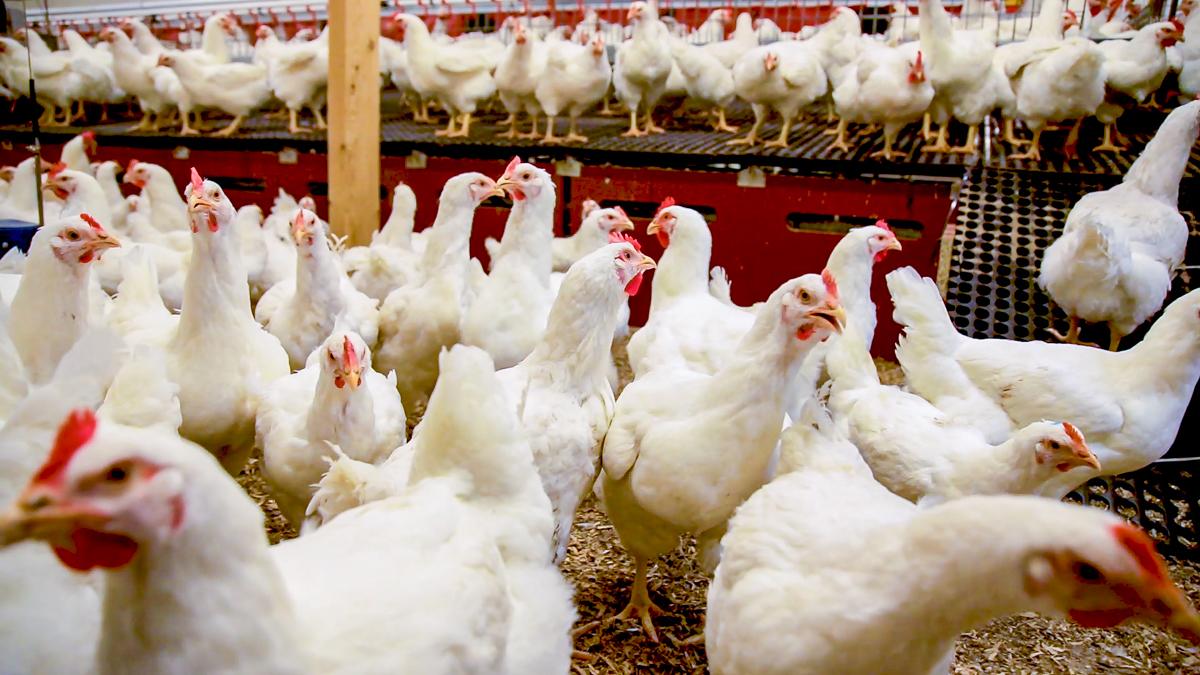 Manor Farm suppliers 'vote no confidence in CEO'