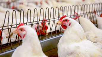 Temporary Control Zone introduced following second suspected avian influenza outbreak