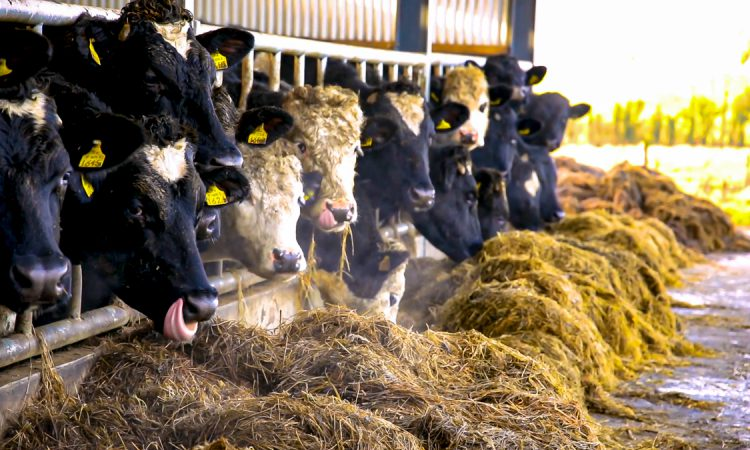 Beef trade: Prices unchanged as supplies break 1 million