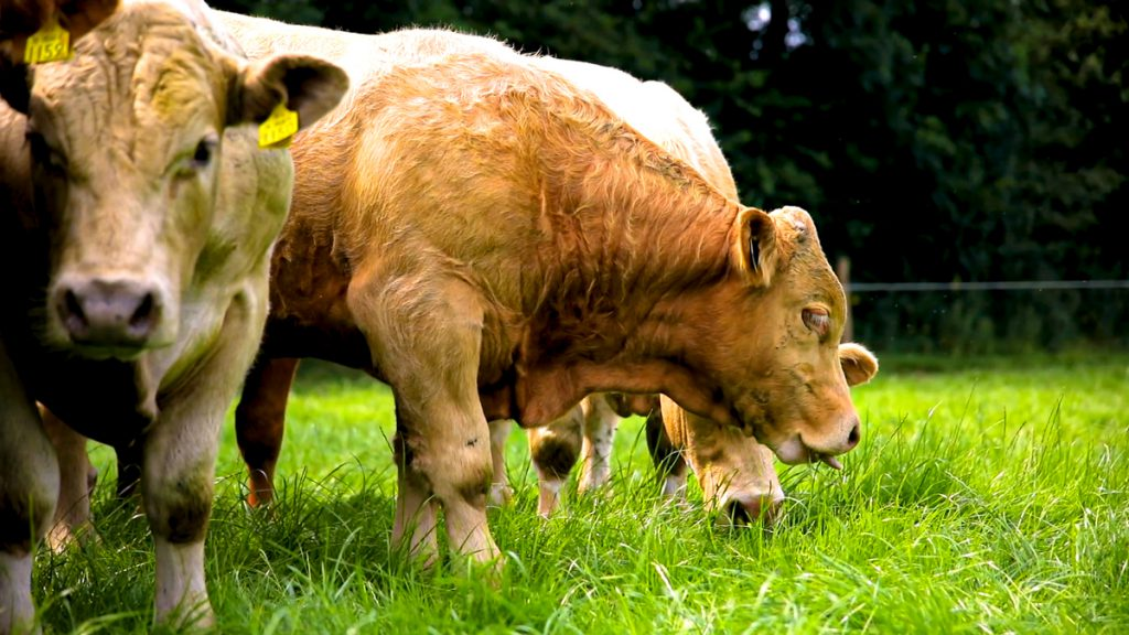 Climate Change Bill overlooks significance of livestock production in NI – LMC