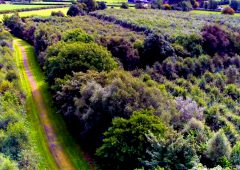 ITGA calls for carbon payments for landowners who plant trees