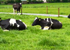Market analysis: European dairy gains end but Irish exports 'generally strong'