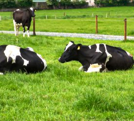 Irish dairy industry 'fully committed' to low-carbon future