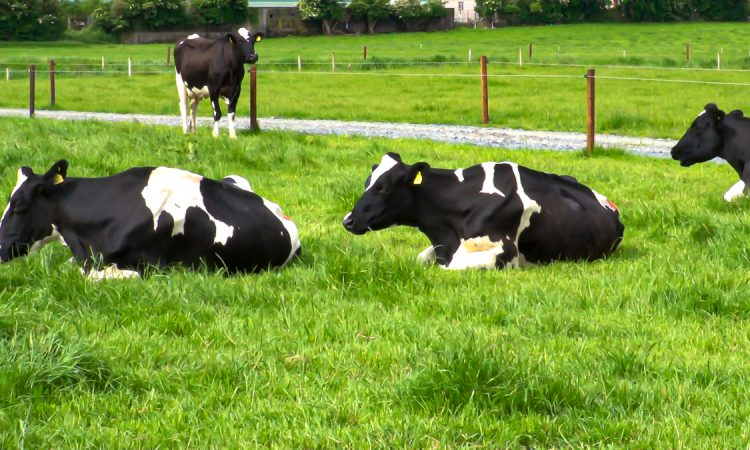 Market analysis: European dairy gains end but Irish exports 'generally strong'