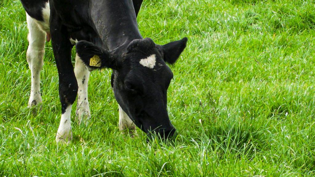 Boyle: Grass-based Irish system 'gives positive environmental characteristics'