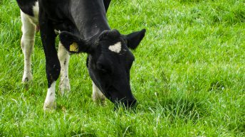 An extra kilo of spring grass is '5 times more valuable than a kilo in summer'