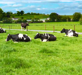 Climate action: 'Irish ag will fail to deliver' according to European NGO
