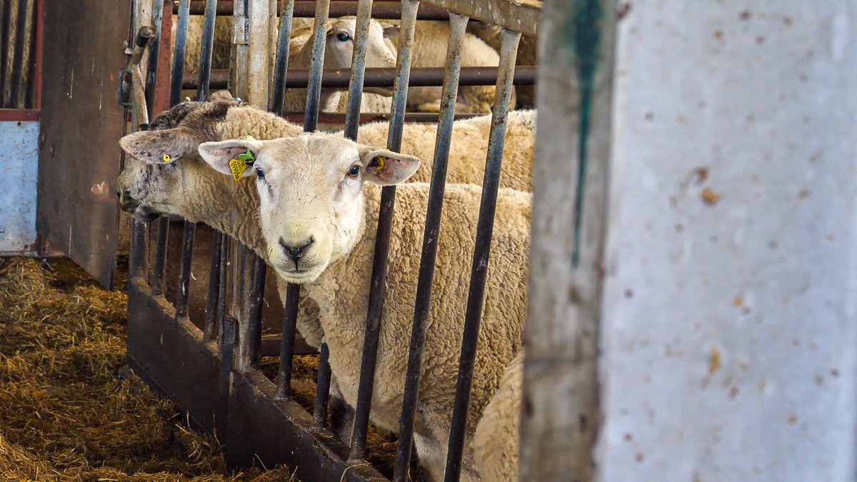 2020 NI animal inventory to be carried out online