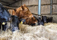 What to do if you are vaccinating livestock this autumn and winter