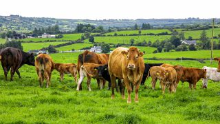 'Open letter on the value of animal agriculture' – penned by a global farming community