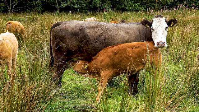 What county produced the most suckler calves last year?