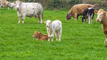 Teagasc unveils new report on sustainability of Irish farms