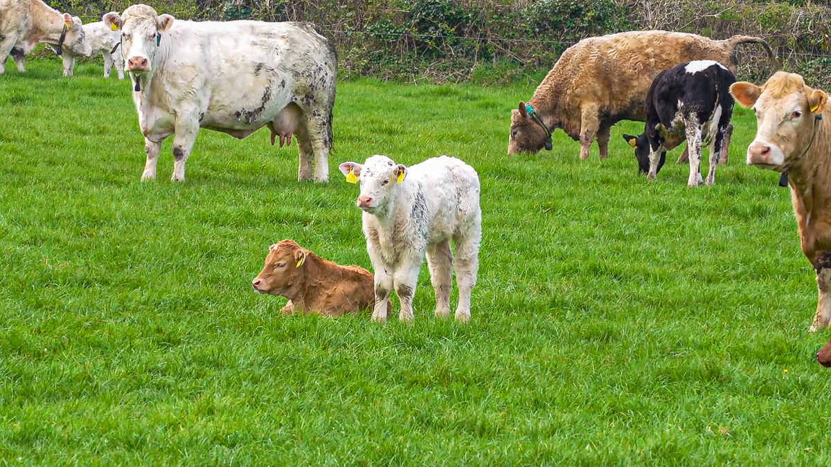 New BVD protocols 'need to be communicated better' with compensation level revisited