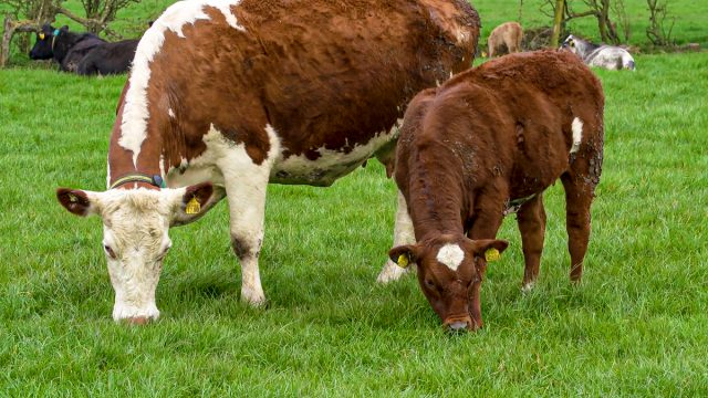 'Higher investment' needed in ag sector to meet climate targets