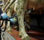 牛奶摄取量继续增加