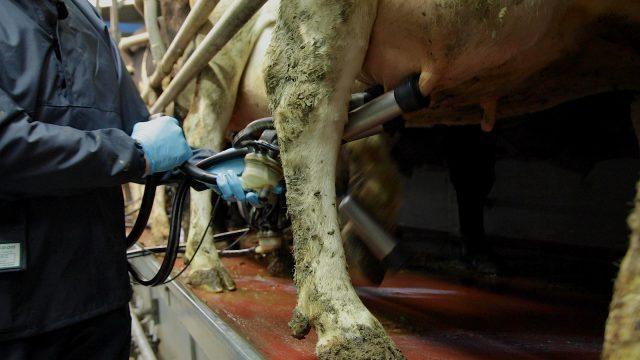 Milk Price Tracker: Upward trend for September supplies