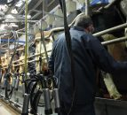 Number of herds milk recording continues to increase