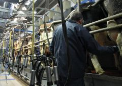 Average dairy farm income of €68,000 in 2020 'possible' – Teagasc
