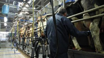 Carbery increases milk price for August supplies